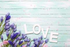 Exprimez l'amour et les fleurs d'amande et bleues roses de muscaries sur des turquois Images libres de droits