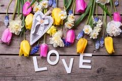 Exprimez l'amour et les tulipes colorées de ressort, narcisse, flowe de muscaries Image libre de droits