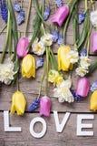 Exprimez l'amour et les tulipes lumineuses de ressort, narcisse, muscaries fleurissent Photographie stock libre de droits