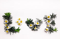 Exprimez l'amour fait de fleurs de camomille et branches de sapin Photos libres de droits