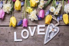 Exprimez l'amour, le coeur et les tulipes lumineuses de ressort, narcisse, muscarie Photographie stock