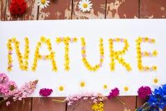 Exprimez la NATURE écrite avec les fleurs jaunes sur le blanc Image stock