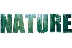 Exprimez la NATURE au-dessus de la forêt neigeuse de paysage au printemps modifiée la tonalité image stock
