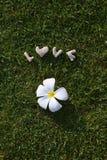 Exprimez le ‹d'†de ‹d'†fait par amour des pierres sur l'herbe verte Photographie stock
