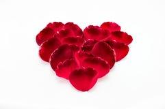 Exprimez votre amour avec beau s'est levé Photographie stock