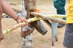 Exprimir a Sugar Cane Foto de archivo