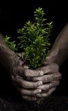 Exprimir un árbol Fotografía de archivo libre de regalías