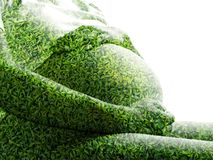 Exproure dobro das folhas da mulher gravida e do verde isoladas no fundo branco Imagem de Stock Royalty Free