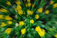 Expulsez de la fleur jaune Photo stock