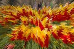 Expulsez de la fleur jaune-rouge Photographie stock libre de droits