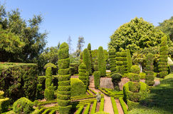 Exquisite bushes in the garden Stock Photography