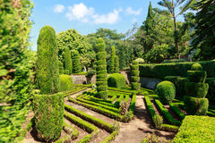 Exquisite bushes in the garden Stock Photo