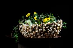 Exquisite flower arrangement with mushrooms and daffodils. Exquisite flower arrangement made by an international artist. flowers on a table made from metal/steel Stock Photography