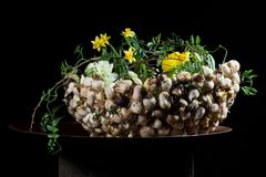 Exquisite flower arrangement with mushrooms and daffodils. Exquisite flower arrangement made by an international artist. flowers on a table made from metal/steel Stock Photos
