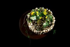 Exquisite flower arrangement with mushrooms and daffodils. Exquisite flower arrangement made by an international artist. flowers on a table made from metal/steel Stock Image