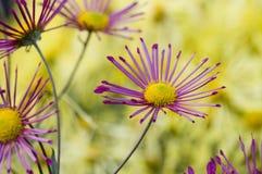 Exquisite flowers Stock Photo