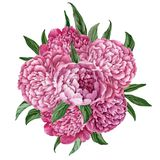 Exquisite and gentle floral bouquet with blooming peonies isolated on white background, watercolor hand-painted design Royalty Free Stock Photography
