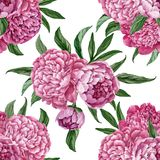 Exquisite and gentle seamless floral pattern with blooming peonies isolated on white background, watercolor hand-painted design Stock Images