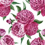 Exquisite and gentle seamless floral pattern with blooming peonies isolated on white background, watercolor hand-painted design Royalty Free Stock Photo