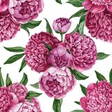 Exquisite and gentle seamless floral pattern with blooming peonies isolated on white background, watercolor hand-painted design Royalty Free Stock Image