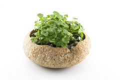 Exquisite potted Stock Image