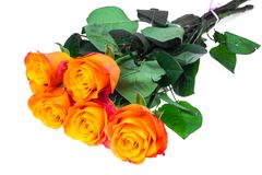 Exquisite roses isolated on white background Stock Image