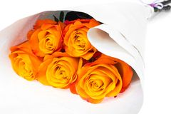 Exquisite roses isolated on white background Stock Photography