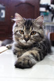 exspression cat Royalty Free Stock Photography
