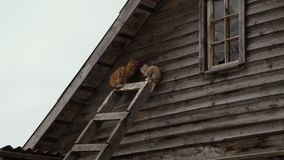Extérieur égaré rouge de chats en hiver Lissez le bourdonnement clips vidéos