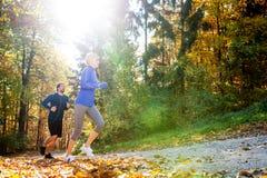 Extérieur courant de beaux couples dans la forêt ensoleillée d'automne Images libres de droits