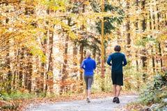 Extérieur courant de beaux couples dans la forêt ensoleillée d'automne Image libre de droits