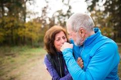 Extérieur courant de beaux couples supérieurs dans la forêt ensoleillée d'automne Photographie stock libre de droits