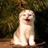 Extérieur de deux mois de chaton mignon Images libres de droits