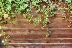 Extérieur en bois de section de barrière Image libre de droits