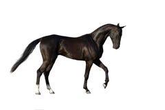 Extérieur noir de cheval Photos stock
