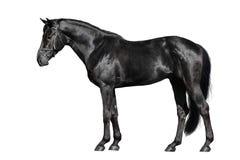 Extérieur noir de cheval photographie stock libre de droits