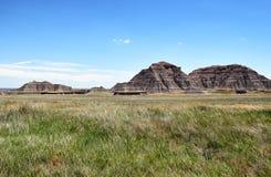 Extensão da grama de pradaria no parque nacional do ermo Imagem de Stock