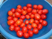 Extensión agradable del tomate Imagen de archivo libre de regalías
