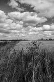 Extensión amplia de las tierras de labrantío cosechadas que muestran la tormenta que recolecta las nubes Foto de archivo