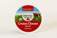 Extensión de queso cremoso Fotografía de archivo
