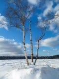 Extensión extensa del campo, cubierta por la manta abundante de la nieve debajo del cielo azul nublado Imagen de archivo libre de regalías