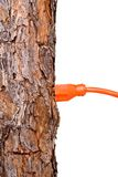 Extension cord in a tree trunk Stock Photography