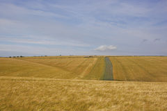 Extensive barley crops Royalty Free Stock Images