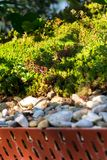 Extensive green living sod roof covered with vegetation mostly tasteless stonecrop seen, sunny day stock photo