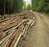 Extensive logging. In Western Carpathians showing huge wood material deposit beside the road Royalty Free Stock Photography