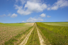 Extensive pea crop with farm track Royalty Free Stock Images