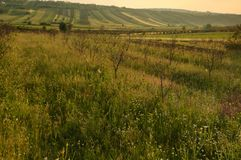 Extensive rural landscape. With patches of fields, orchards and hedges Serbia, Prokuplje royalty free stock photo