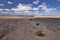 Extensive stony desert with e green bushes in Morocco Stock Images