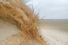 Root system of grass in eroded dune stock photography