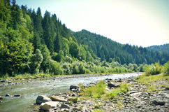 Extensive view of the mountain river and mountains with trees Stock Photos